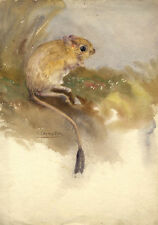 Künstlerische Aquarelle (ab 1945) mit Maus