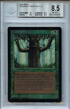 MTG Beta Ironroot Treefolk BGS 8.5 NM-MT+ Card  with 10 centering WOTC  2815