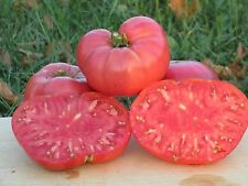 Watermelon Tomato Seeds- Organic-  Huge Beefsteak Variety- 30+ 2017 Seeds