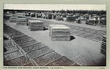 Vintage Postcard Fig picking and Drying near Merced CA Agriculture