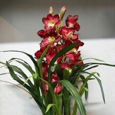 100 PCS Chinese Cymbidium Orchid Indoor Potted Flowers Orchid Cicada Q2Z1 S Q5T5
