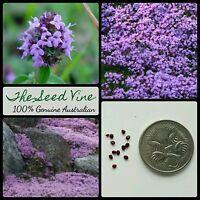 500+ PURPLE CREEPING THYME SEEDS (Thymus serpyllum) Ground Cover Bees Flowers