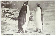 'Emperor Penguins' original postcard from Shackleton's Antarctic expedition