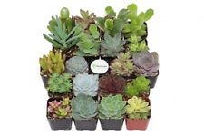 "Succulent Plant Collection 20 Unique Varieties 2"" Pots Fully Rooted w Guide"
