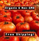 500 Beefsteak Tomato Seeds | ORGANIC • NONGMO • HEIRLOOM • USA | Vegetable Seed