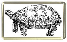 Tortoise Fridge Magnet - Line Art Drawing