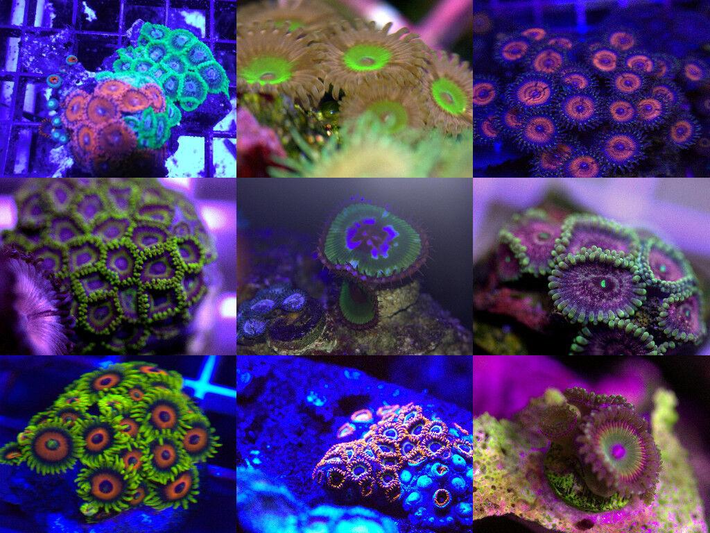 VW Reefs