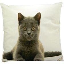 Kissen Kissenbezug Katze 50x50cm mit Füllung British Shorthair Kuschelkissen