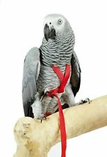 Adventure Exercise Parrot Harness - 6 Sizes - Red - Black - Bird