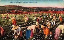 CPA   Cote d'Azur - Cueillette du Jasmin     (513955)