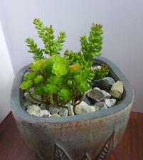 3 Mini Artificial Succulents Plants Yacon With Ganoderma Bush Grass