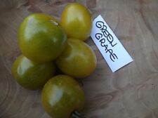 Tomato Green Grape - 10+ seeds - SWEET and RICH!