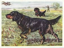 5Original 1952 Dog Art Print Austria Tobacco Bildwerk Trade Card GORDON SETTER
