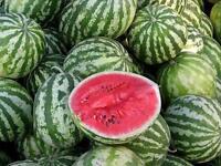 90 SEEDS / Watermelon Seeds Astrakhan Heirloom Vegetable Seed from Ukraine
