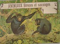 Animaux féroces et sauvages. Album d'images chromo. Années 30.