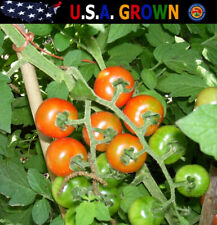 Large Red Cherry Tomato Seeds (100 Seeds) Non-Gmo Heirloom Gardening