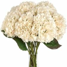 Hydrangea Standing Dried & Artificial Flowers