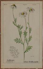ROMER ANTHEMIS ARVENSIS CAMOMILLA CHAMOMILE MAYWEED BOTANICA FIORI FLOWERS 1843