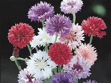 Flower Seed:  Centurea Seeds  Bachelor Buttons  200 Seeds Polka Dot Mix