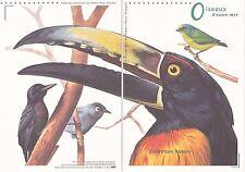 Document Philatélique Timbre 1er Jour : 00/00/ 2003 - Oiseaux d'outre-mer
