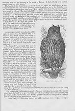 Uhu eagle-owl Bubo bubo Holzstich von 1863 Eulen