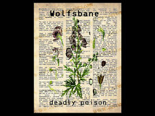 WOLFSBANE 10x8 DICTIONARY WORD ART PRINT wicca herb poster kitchen witch