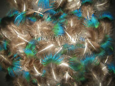 100 Pcs blue Peacock plumage feathers