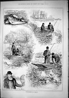 Old Sport 1882 Perch Fishing Hampton Paternoster Ditton Fishermen Ham Victorian