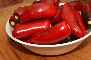 CHILI PEPPER HOT JALAPENO RED – 50 SEEDS  ORGANIC / NON GMO
