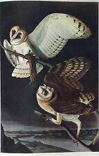 ANTIQUE 1937 AUDUBON PRINT - No. 171 BARN OWL - FREE SHIPPING !!