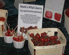 """Tomato """"Matt's Wild Cherry"""" Chef Jamie Oliver's Favorite Variety -  Very Early!!"""