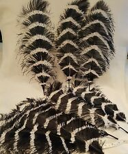 Fairy Black/White long Ostrich Feathers Day Party Decoration