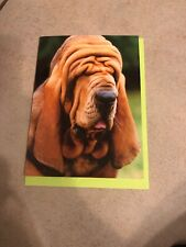 avanti press Dog Humor Birthday Greeting Card-New!