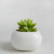 Maikai Products Little Bun-Shaped Ceramic Minimalist Succulent Planter (0056)