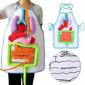 Anatomy Apron Human Body Organs Awareness Educational Insights Children UK