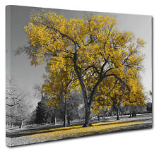 Yellow Leaves Lone Tree Landscape Canvas Print Wall Art Picture Size 51x76cm