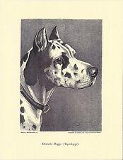 1890 Jean Bungartz Dog Art Head Study Print Reproduction HARLEQUIN GREAT DANE