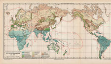 Antique map. THE WORLD MAP OF VEGETATION & PLANT DISTRIBUTION. c 1895