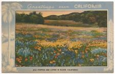 "Postcard CA Vintage ""Greetings from CALIFORNIA"" Poppies & Lupine in Bloom c1940s"