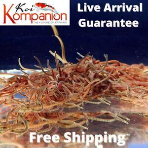 Live Blackworms Great Fish Food Freshwater Aquarium Free Shipping Koi Kompanion