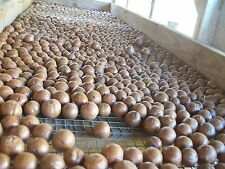 MACADAMIA NUTS in-shell FRESH 2018 SEASON**BEST PRICE on EBAY & FREE SHIPPING!!!