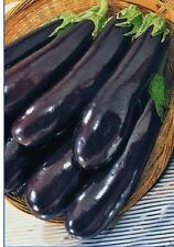BIG PACK SIZE Giant Eggplant seeds Long Pop. Mid-early vegetable from Ukraine