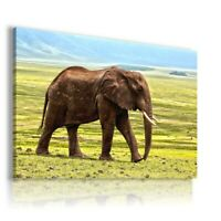 SAWANNA ELEPHANT Wild And Domestic Animals Canvas Wall Picture AN199 UNFRAMED