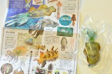 "KAIYODO Cuttlefish Gashapon Capsule key chain figure "" Bigfin reef squid"""