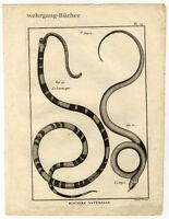Kupferstich von Benard um 1770, Schlangen, Histoire Naturelle