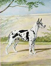 Harlequin Great Dane - Vintage Color Dog Print - MATTED