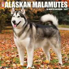 Just Alaskan Malamutes (dog breed calendar) 2021 Wall Calendar (Free Shipping)