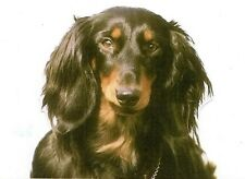 DACHSHUND (Black & Tan Longhair) DOG on TWELVE 6 inch Fabric Squares to Quilt