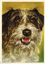 Vintage German postcard photo of Cockapoo