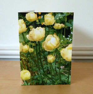 Blank Greetings Cards Flower Yellow Birthday All Occasions Notecard
